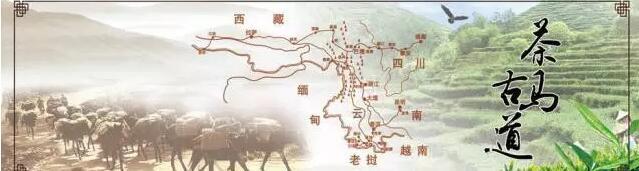 茶马古道:普洱茶文化之魂