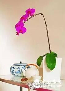 当花遇到茶、茶遇见花时