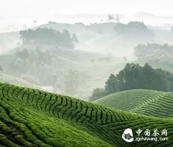 河南人不能不知道本土茶文化