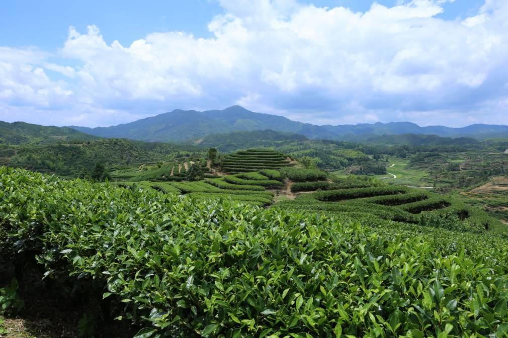 前所未有!部省联合主办,中国国际茶叶博览会将于5月在G20杭州峰会主会场举行