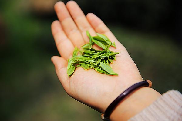 """中国茶业去年出口量增长17% 标准化品牌化仍困扰茶企""""出海"""""""
