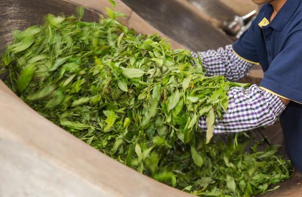 中国茶叶出口量价齐升 金融资本介入茶市