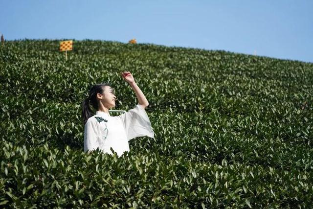 向美而行!她是2020年中华茶奥会形象代言人